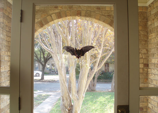 bat-in-window